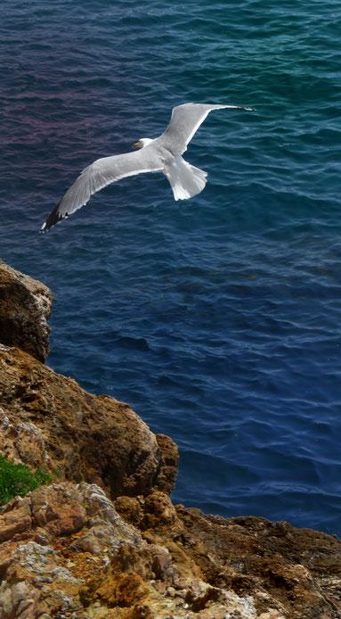 Tierkommunikation Albatross - Du kannst auch ein Bote sein
