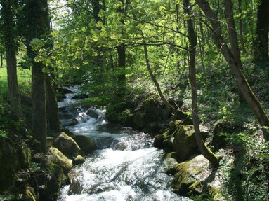 Foto Laufbachtal