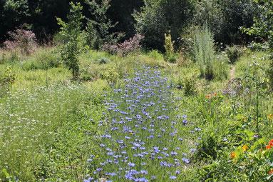 Choisir les plantes pour votre jardin de m dicinales for Choisir plantes jardin