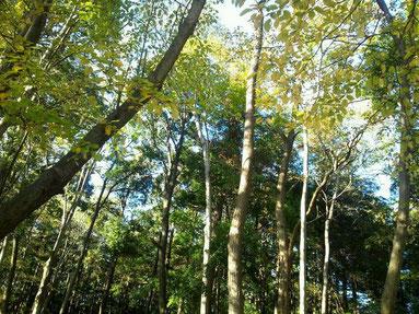 スピリチュアルな森林