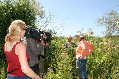 Dr. Michael Weiß zeigt NDR-Moderatorin Heike Götz die Volksarzneipflanze Engelswurz am Peeneufer.