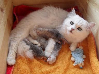 Sissys junge Kätzchen, geboren am 30.7.13 (Foto: einen Tag alt)