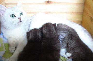 Emilys Kitten vom So, den 3.8.2014 (Alter: 16 Tage)