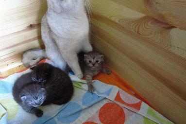 Emilys Kitten (Alter: 16 Tage)
