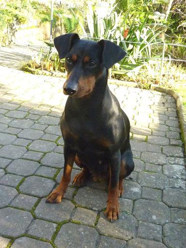 21.11.2014, Geeva kurz nach dem Tierarztbesuch ;-))