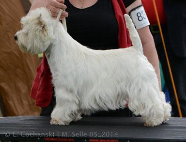 Lucie Deutscher Champion KfT u. VDH
