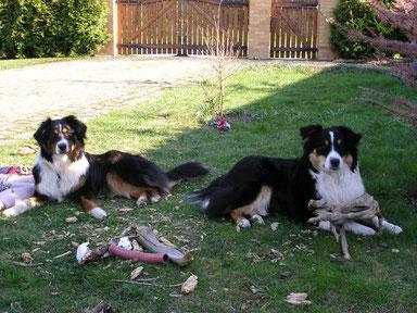 Hunde - Chaos - Verhaltenstherapie