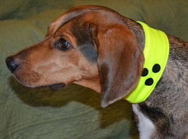 Halsband, bestickt, Loop, Blindenpunkte, Blinder Hund,Blindenhund,blind