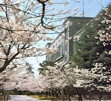 我が母校・・・ 入学を祝う桜並木と旧校舎     ↑ クイック  画像拡大