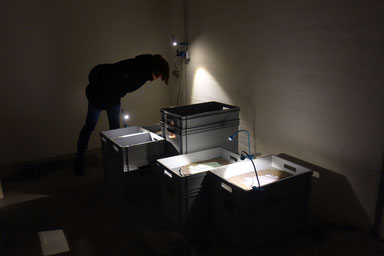 Katrin Leitner, Kunst, Austelllung, Installation, Keramik, Lyrik, Texttafeln,Archeologisch,dystopiscgh, futuristisch