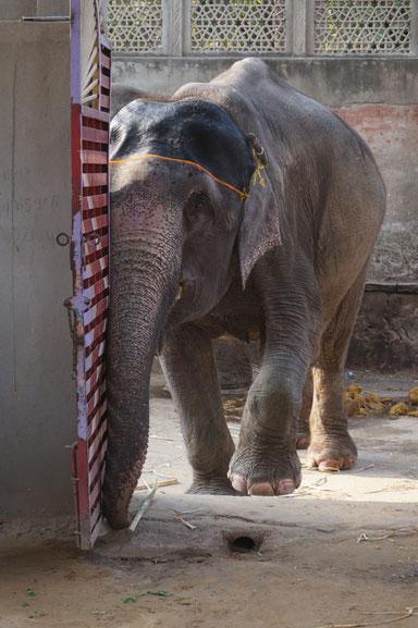 Elefant, Weisheit, Haltung, Psychotherapie