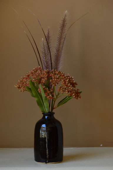 small sunny garden, desert garden, amy myers, photography, garden photography, monday vase, in a vase on monday, vauquelinia, californica, arizona rosewood, pennisetum rubrum, ornamental grass