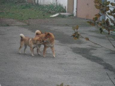 Bara und Rocky