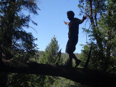 Dans la forêt, je continue mon chemin. A BIENTOT SUR LES ROUTES!