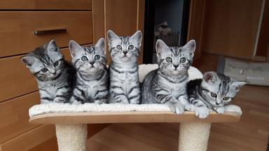 Henry, Hubsi, Hannes, Hardy und Hailey hier 9 Wochen alt