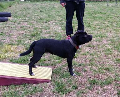 Centro cinofilo GASDOG , addestramento cani viareggio , educazione cani viareggio , corsi per cuccioli , corso agility viareggio , agility dog , versilia , pietrasanta , camaiore , lucca , pisa , livorno , addestratore cinofilo ENCI , educatore cinofilo