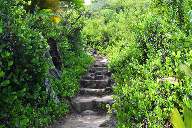 Our trip to the beautiful Seychelles - Path on the Curieuse Island
