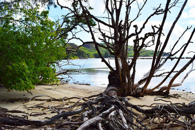 Our trip to the beautiful Seychelles - Vegetation on the Curieuse Island