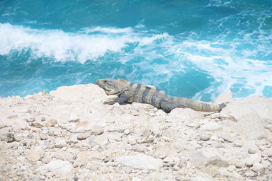 Top Things to See in Mexico - Conzumel