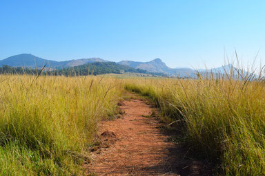 A Scenic Drive Through Swaziland - Mlilwane Wildlife Sanctuary