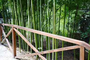 How to Spend Time in Tbilisi - Bamboo