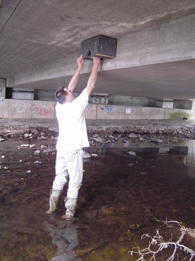 Reinigung Wasseramselkästen