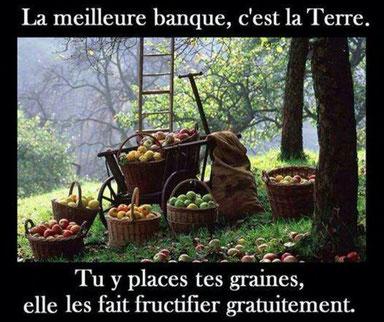 Investissez dans un verger en Bourgogne