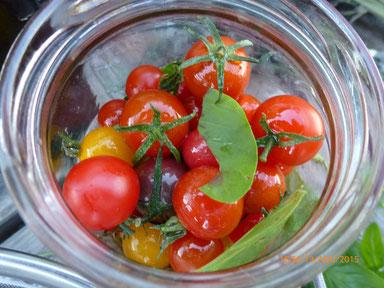 Tomates de variétés anciennes du jardin Alôsnys