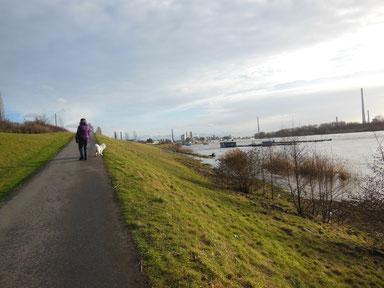 Spatzieren am Rhein