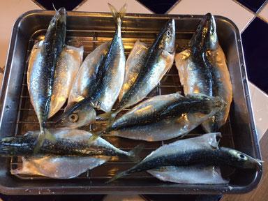 先日釣ったのを頂いた小鯖の干物の下準備。今夜あたりおつまみにイケるかも♪