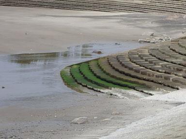 緑の部分が濡れていたら危険大!!かなり滑りますよ~