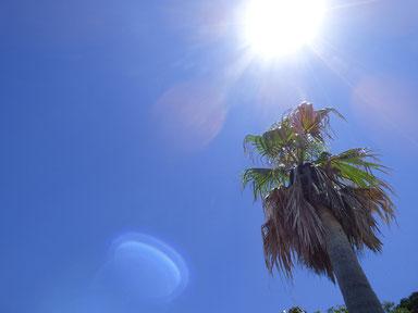 今日も夏空でした~