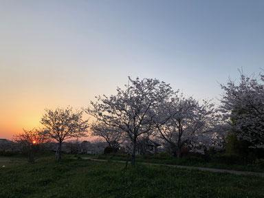 これは前日帰省した時の夕日と桜。