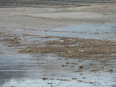 梅雨特有の昨日の雨で更にインサイドは溜まっています。