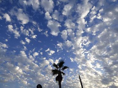 そして、今日の夕方。雲がキレイでした~
