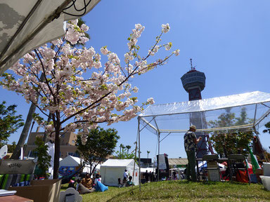 まだ桜がキレイでした。
