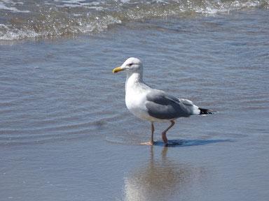 ジョナくん今日は浜辺をお散歩してました。