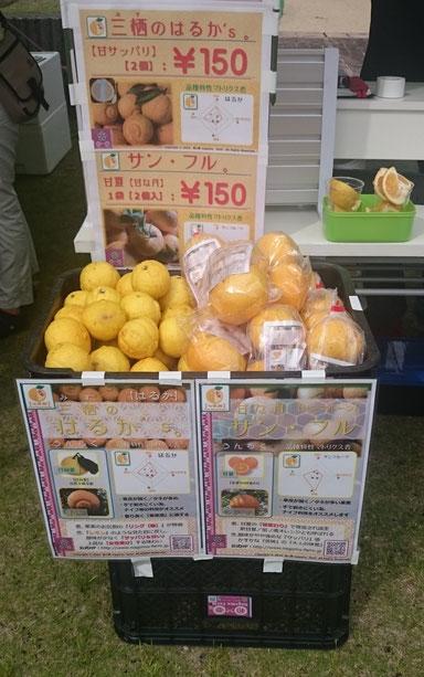 七武柑販売【イノブータン王国建国祭】販売