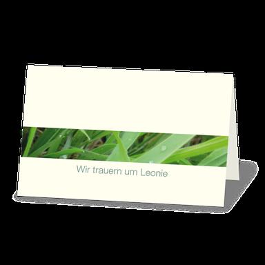 Trauerkarte Gras mit Wassertropfen, Morgentau