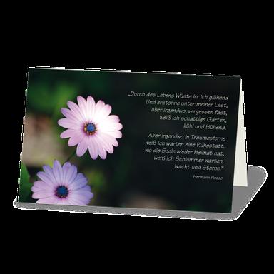 Trauerkarte Margaritenblüte zart violett vor dunklem Hintergrund. Darüber ein Text von Hermann Hesse