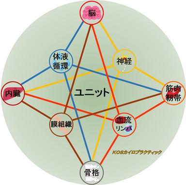 オステオパシーが考える、構造的、機能的に繋がり合う1つのユニットとしてのからだ