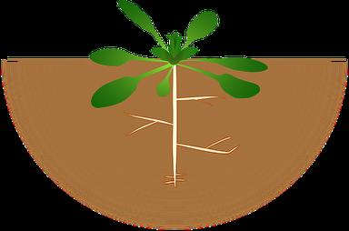 évolution des plantes avec les sonds SENTEK qui contôlent l'humidité des sols - distributeur AGRALIS