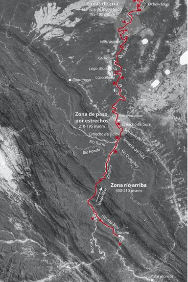 O caminho percorrido pelos chipi chipis no rio Beni e en seus afluentes. Mapa: Guido Miranda Chumacero, WCS Bolivia.
