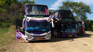 bus Thaï