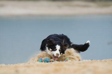 Ferien mit Hund im Hotel