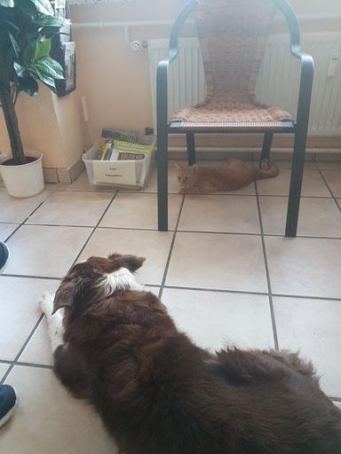 Hündin Stine und Katerchen haben es sich im Wartezimmer unserer Kleintierpraxis in Heide bequem gemacht. Sie brauchen keinen Termin.