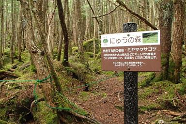 にゅう 登山 ガイド