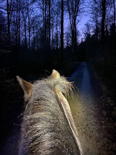 Morgens um 07.00 Uhr im Wald