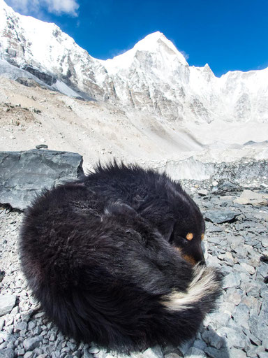 Den Hund vom Everest Base Camp haben wir dort auch getroffen