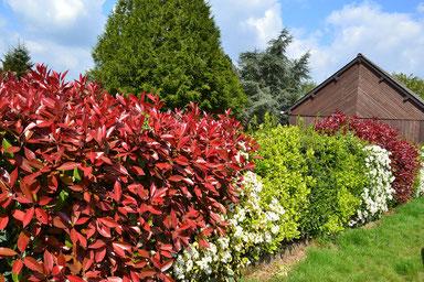 Hecke mit abwechslungsreicher Farbgebung, erreicht durch unterschiedliche Heckenpflanzen.